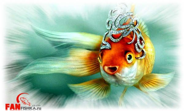 Different types of goldfish species